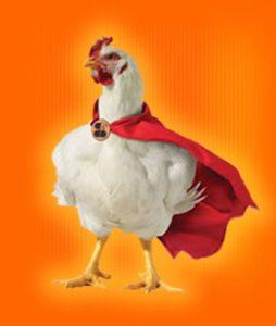 Todo lo que necesitas saber sobre el pollo
